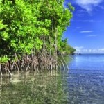Destruction of Mangroves Costs up to US$42 Billion in Economic Damages Annually