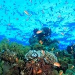 Global Economy to Lose Billions without Action to Stop Ocean Acidification