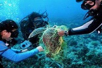 Entanglement in Marine Debris