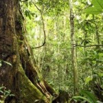 Protecting Forests Alone Would Not Halt Emissions from Land Use Change