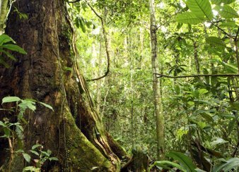 Forests Conservation. © PIK / Thinkstock