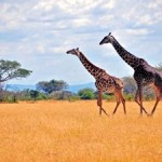 World on Track to Meet 2020 Target for Protected Areas on Land and Sea