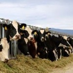 Meat and Dairy Consumption Fuelling Climate Change