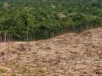 t2s-whrc-amazon-deforestation