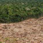 55% of Carbon in Amazon's Indigenous Territories, Protected Lands at Risk